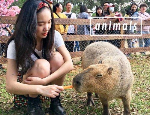 來趟與動物們的輕旅行!特搜人氣農場、動物園,還能近距離互動唷