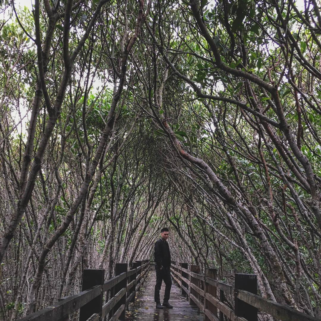 新竹景點,香山沙丘,魚鱗天梯,馬武督探索森林,新豐紅樹林,東安古橋